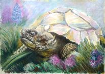 Tiere, Gras, Schildkröte, Acrylmalerei