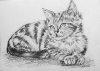 Tiere, Bleistiftzeichnung, Katze, Zeichnung