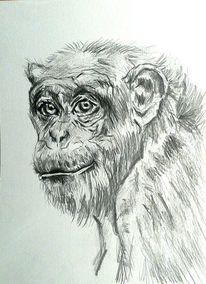 Bleistiftzeichnung, Weiß, Tiere, Schimpanse