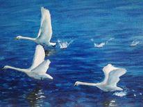 Wasser, Schwan, Fliegen, Malerei