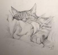 Kater, Tiere, Skizze, Katze