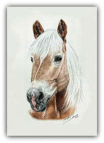 Pferde, Pferde portrait, Haflinger, Pastellmalerei