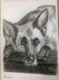 Hund, Bleistiftzeichnung, Zeichnungen,