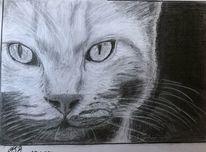 Katze, Mystik, Bleistiftzeichnung, Zeichnungen