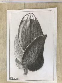 Knospe, Blumen, Bleistiftzeichnung, Zeichnungen