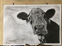 Bleistiftzeichnung, Kuh, Tiere, Zeichnungen