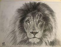 Löwe, Bleistiftzeichnung, Kohlezeichnung, Zeichnungen