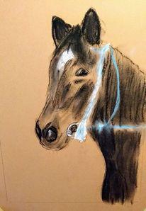 Pferde, Hengst, Zeichnungen