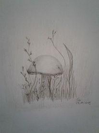 Natur, Bleistiftzeichnung, Pflanzen, Pilze