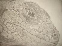 Reptil, Zeichnungen