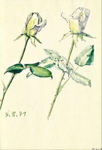 Geringswalde, Weisse rosen, Garten, Martha krug