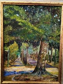 Licht, Straße, Schatten, Baum