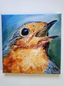 Portrait, Vogel, Rotkehlchen, Frühling