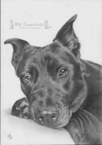 Hund, Bleistiftzeichnung, Hundeportrait, Tierportrait