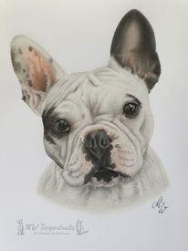 Hund, Französische bulldogge, Zeichnung, Polychromos