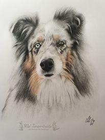 Zeichnen, Hund, Polychromos, Zeichnungen