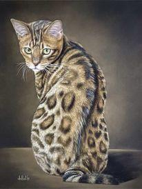 Bengal, Katze, Bengalkatze, Pastellmalerei