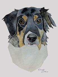 Australian shepherd, Hütehund, Erinnerung, Hundeportrait