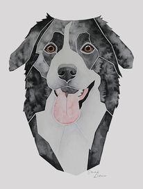 Malen, Hundeportrait, Auftragsarbeit, Bordercollie