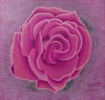 Rose, Blumen, Eisränder, Zeichnungen