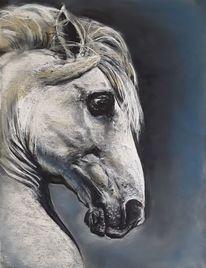 Pferde, Pastellmalerei, Schimmel, Zeichnungen