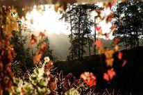 Herbst, Baum, Licht, Fotografie