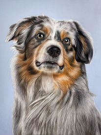 Hundeportrait, Hund, Weiß, Pastellmalerei