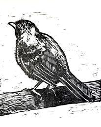 Drossel, Vogel, Tiere, Linolschnitt