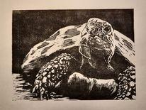 Tiere, Linolschnitt, Schildkröte, Druckgrafik