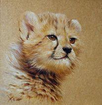 Afrika, Gepard, Katze, Babyface