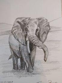 Bleistiftzeichnung, Naturschutz, Elefant, Schwarz