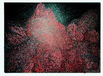 Biologisch, Schwarz, Rot, Unterwasser