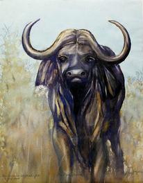 Meisterwerk, Kaffernbüffel, Landschaft, Afrika