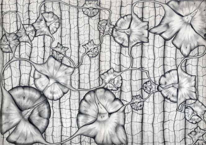 Ananas, Bleistiftzeichnung, Physalis, Textur, Zeichnung, Zeichnungen