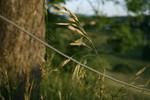 Verückt, Gras, Wiese, Grün