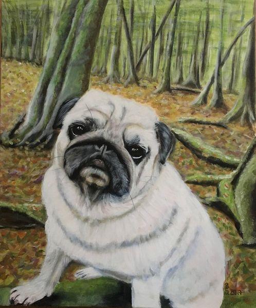 Vierbeiner, Blätter, Fell, Mops, Wald, Hund