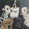 Hund, Dalmatiner, Licht und schatten, Vierbeiner