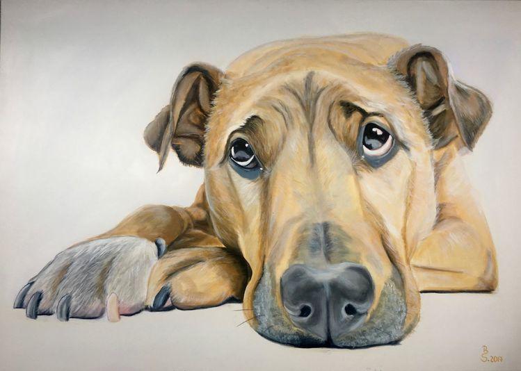 Fell, Augen, Hund, Haustier, Vierbeiner, Malerei