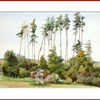 Wald, Sommer, Aquarell,