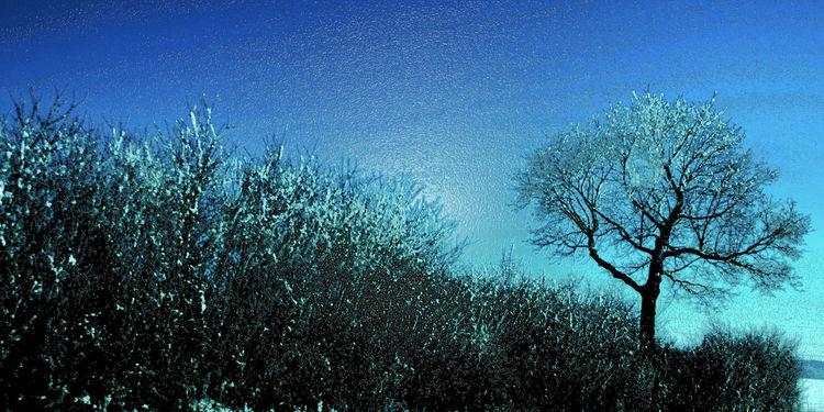 Pflanzen, Himmel, Feld, Kalt, Baum, Hell