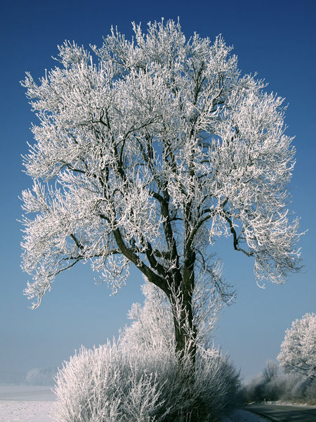 Schnee, Busch, Eis, Baum, Pflanzen, Himmel