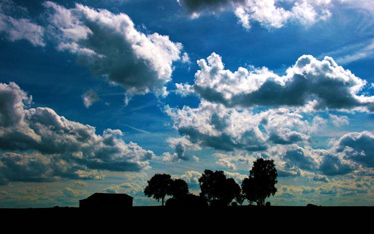 Baum, Sonne, Pflanzen, Licht, Wolken, Himmel