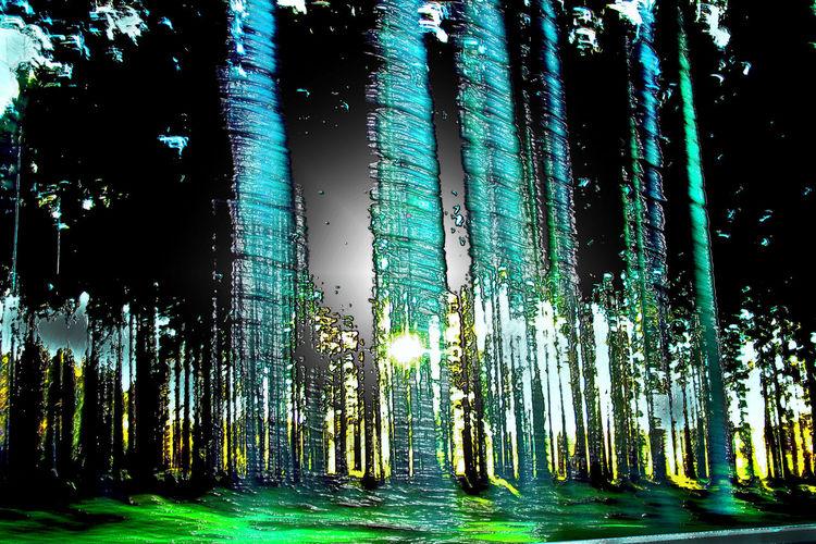 Baum, Licht, Holz, Geschwindigkeit, Pflanzen, Warm