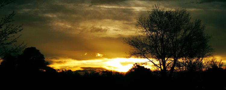Wolken, Kühl, Strauch, Zweig, Licht, Abend