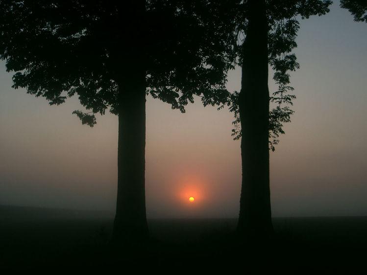 Zweig, Holz, Nebel, Früh, Feld, Sonnenaufgang