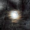 Licht, Baum, Energie, Schatten
