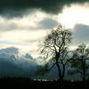 Baum, Wolken, Pflanzen, Äste