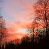 Wolken, Schatten, Stamm, Himmel