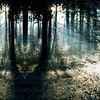Stamm, Sonne, Waldboden, Wurzel