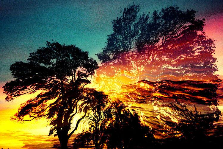Wolken, Wind, Äste, Sonne, Baum, Spät